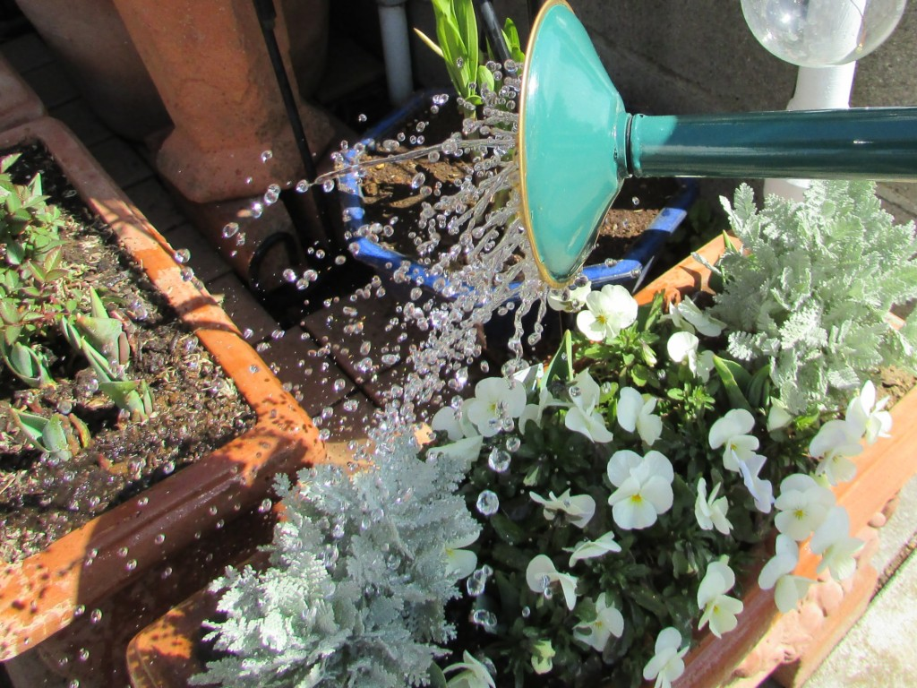 watering can (2-1)