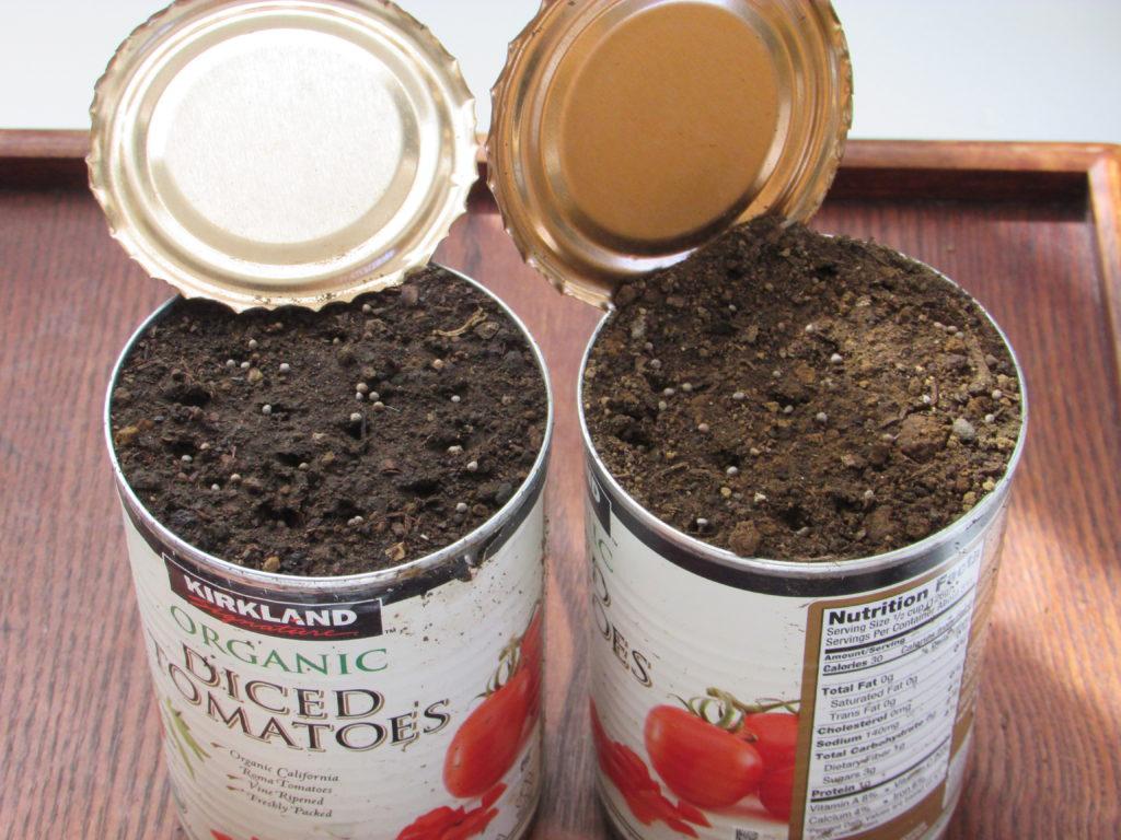 I sowed seeds of rucola(0)