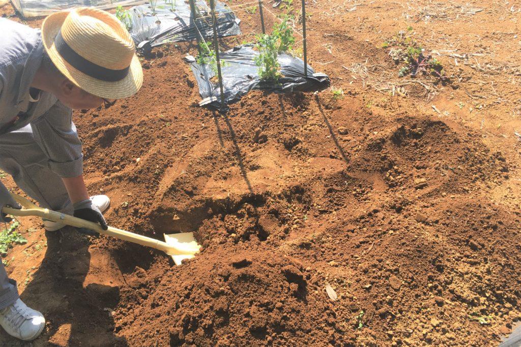 cultivate a field