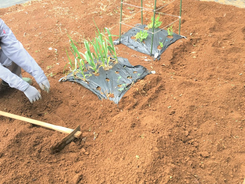 cultivate a field 3