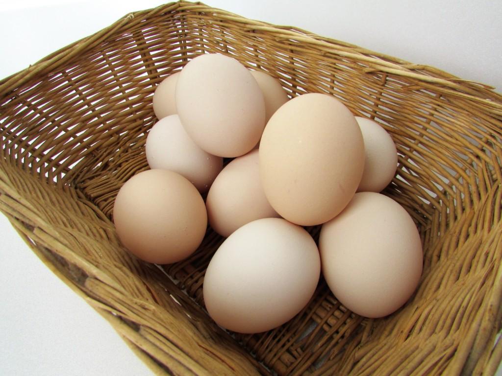 eggs of fusanoeki.fusa