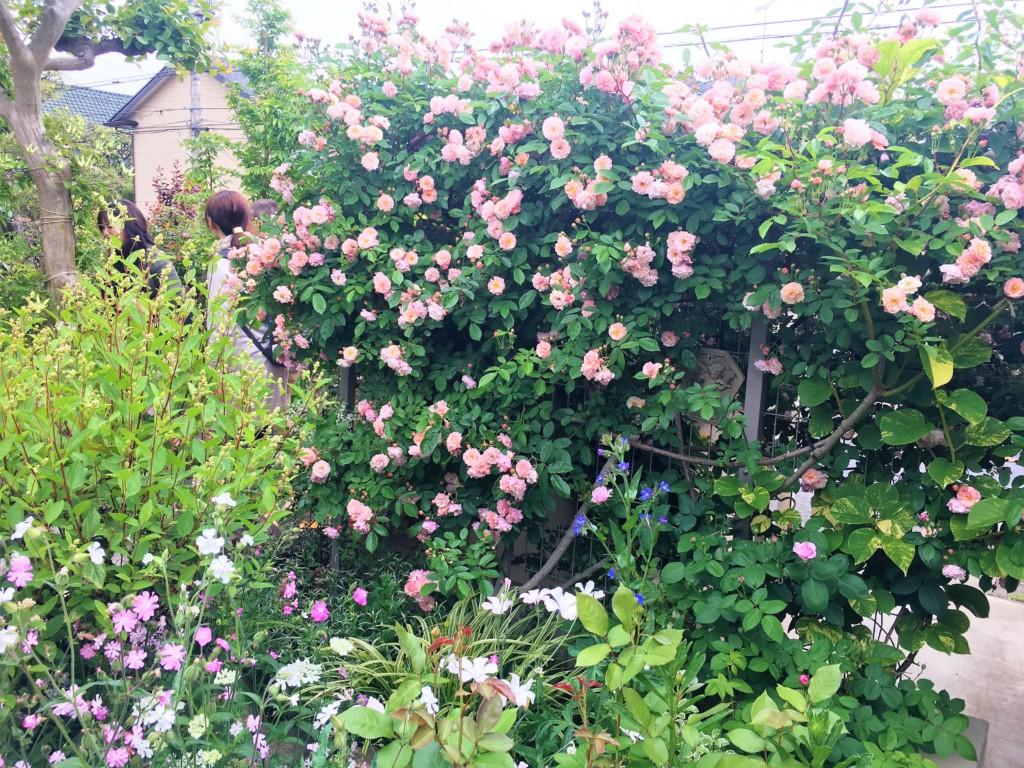 nagareyama open garden 2019 (4)
