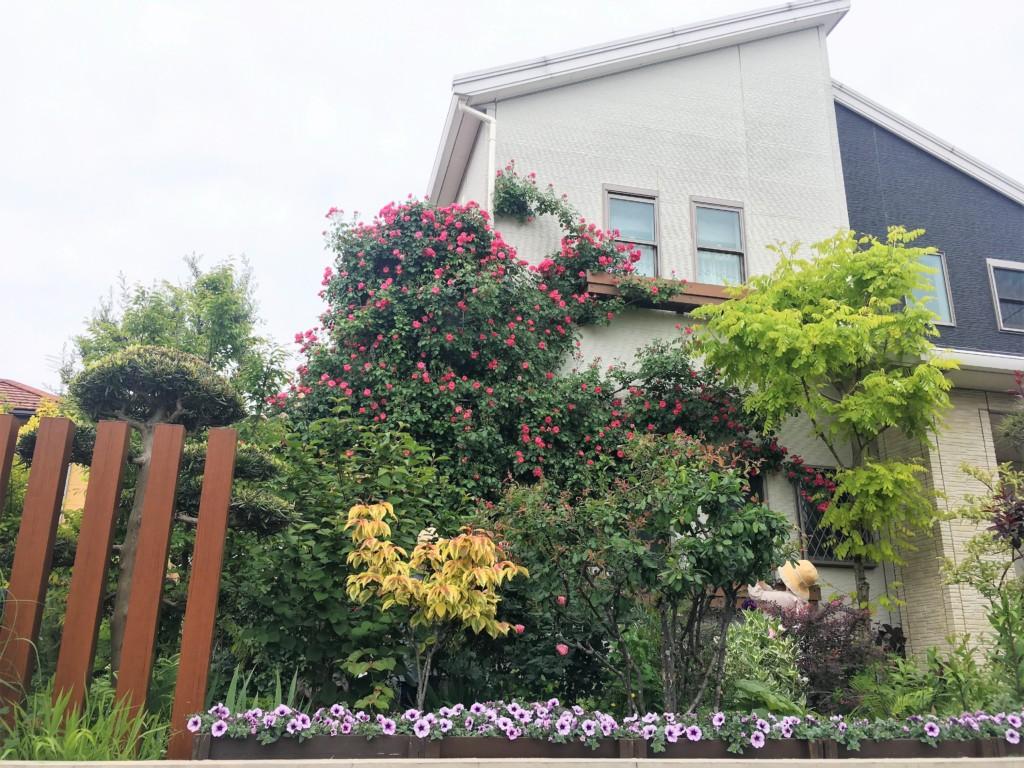 nagareyama open garden 2019 (5)