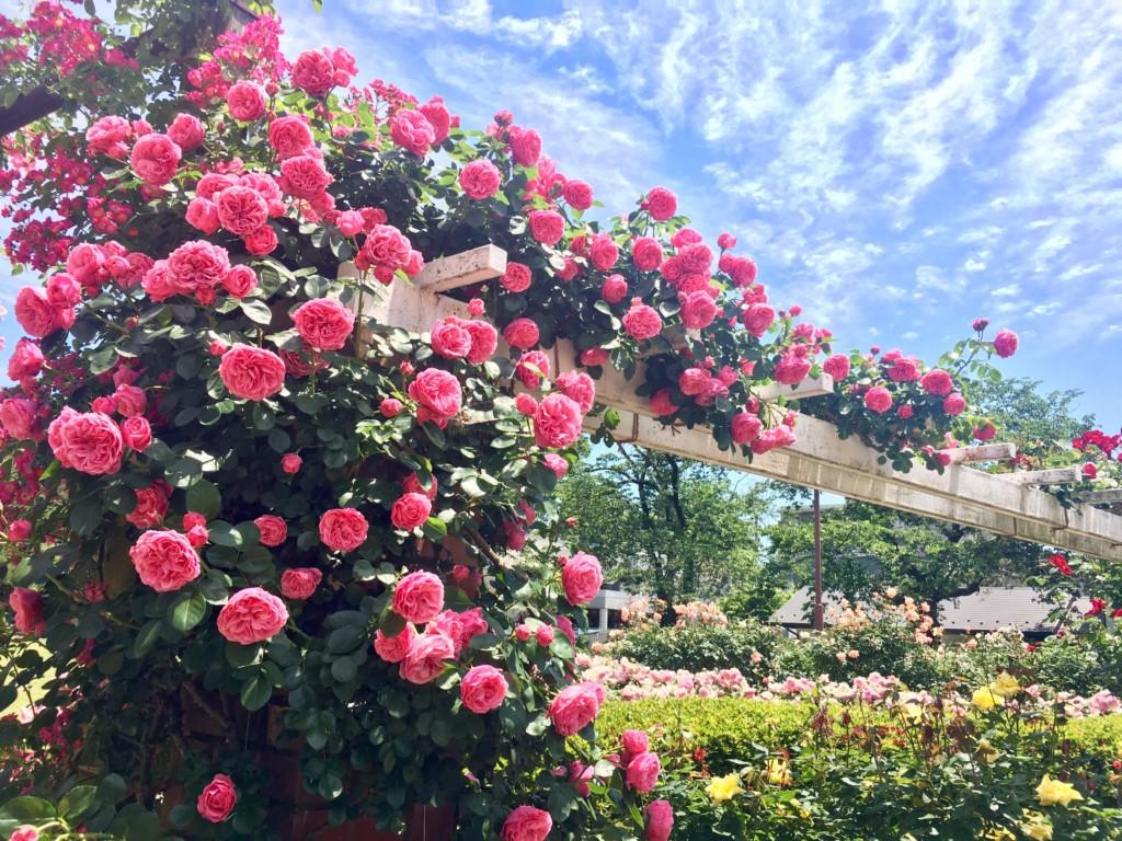 satomipark rosegarden