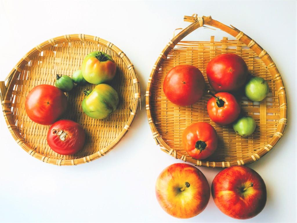 tomato_6