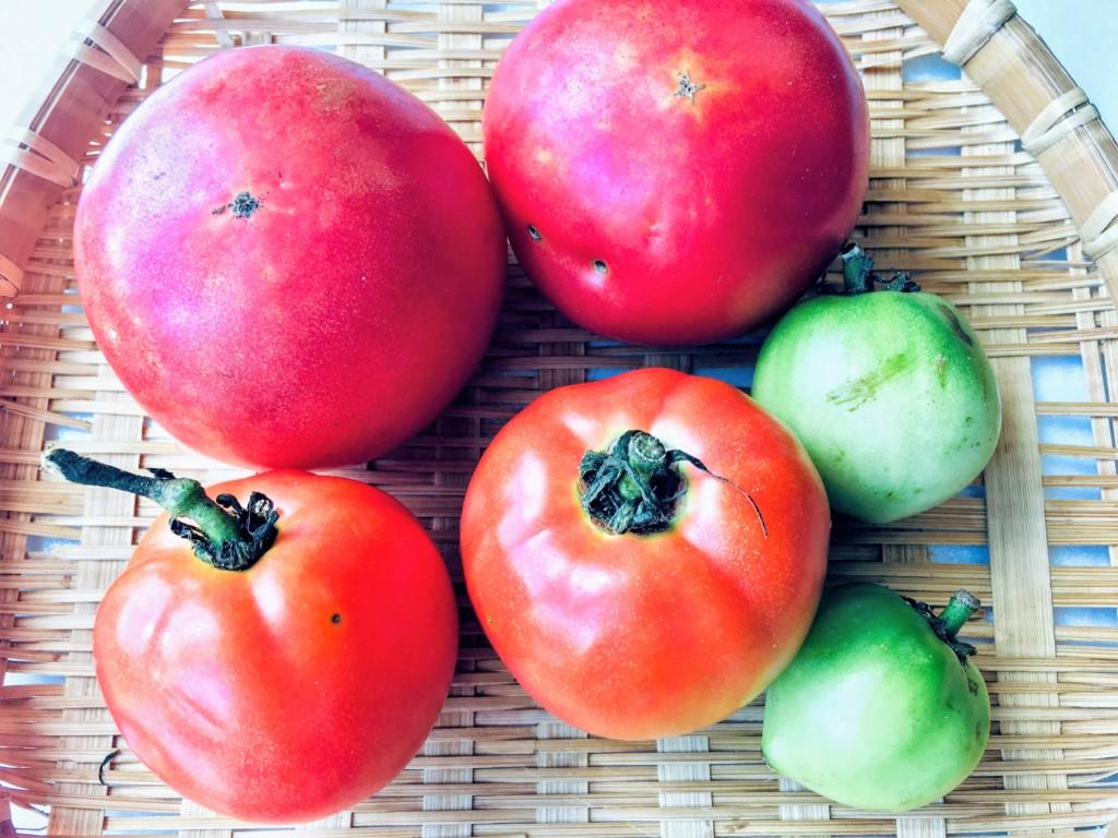 tomato_7