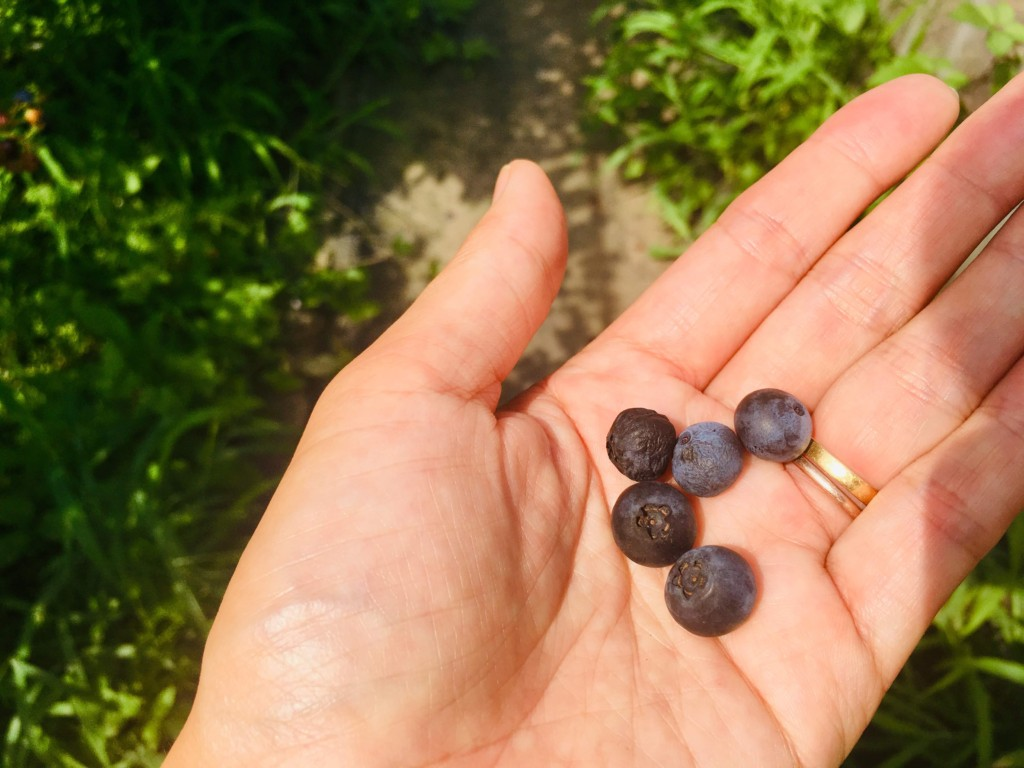 blueberry (5)