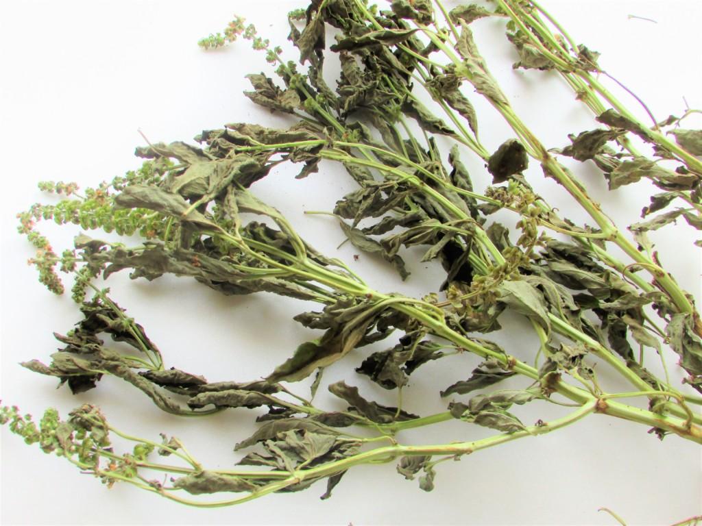 dried-basil_2