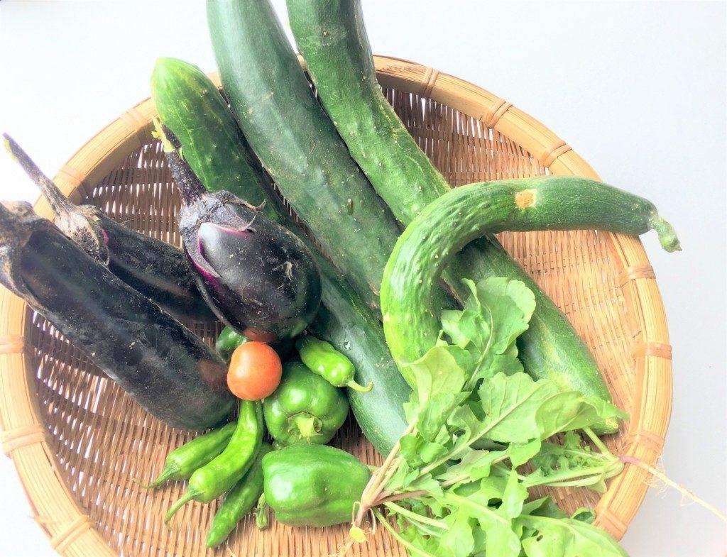 sharebatake-harvest