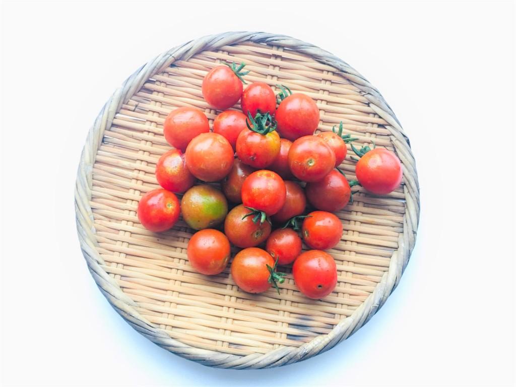 sharebatake-tomato3
