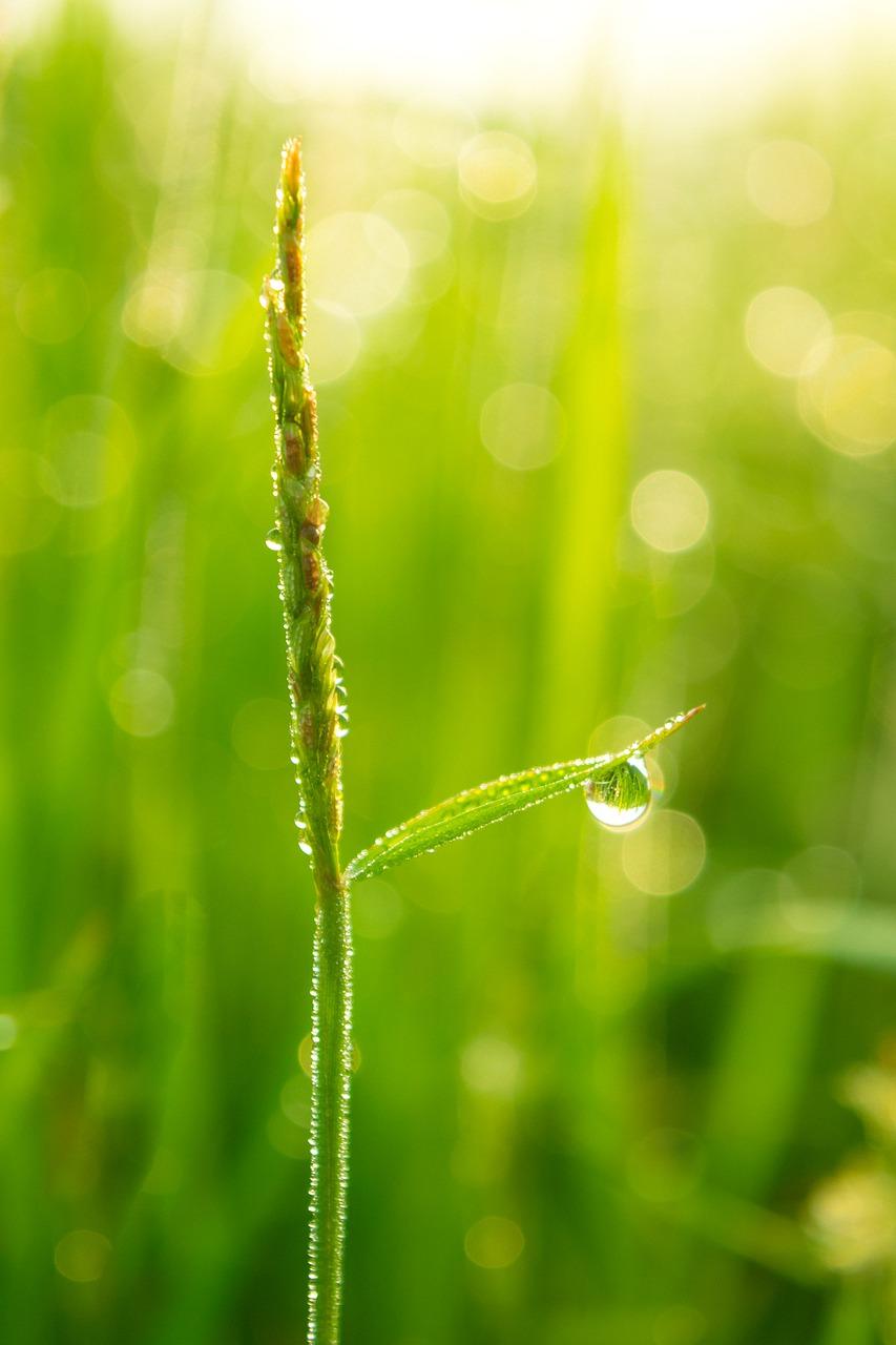 weed-companionplants, Paddy