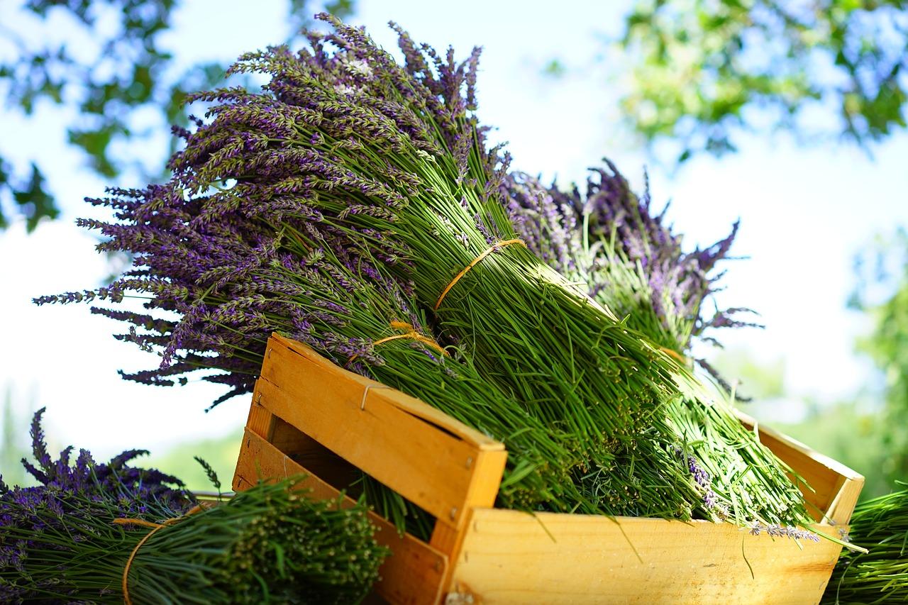 Lavendervinegar