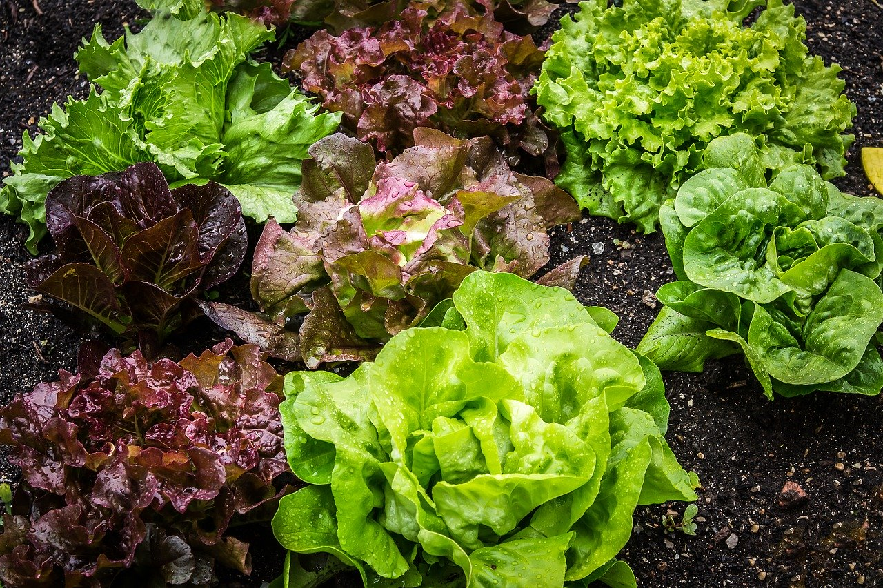 mix-leafy vegetables,Leaf, Lettuce