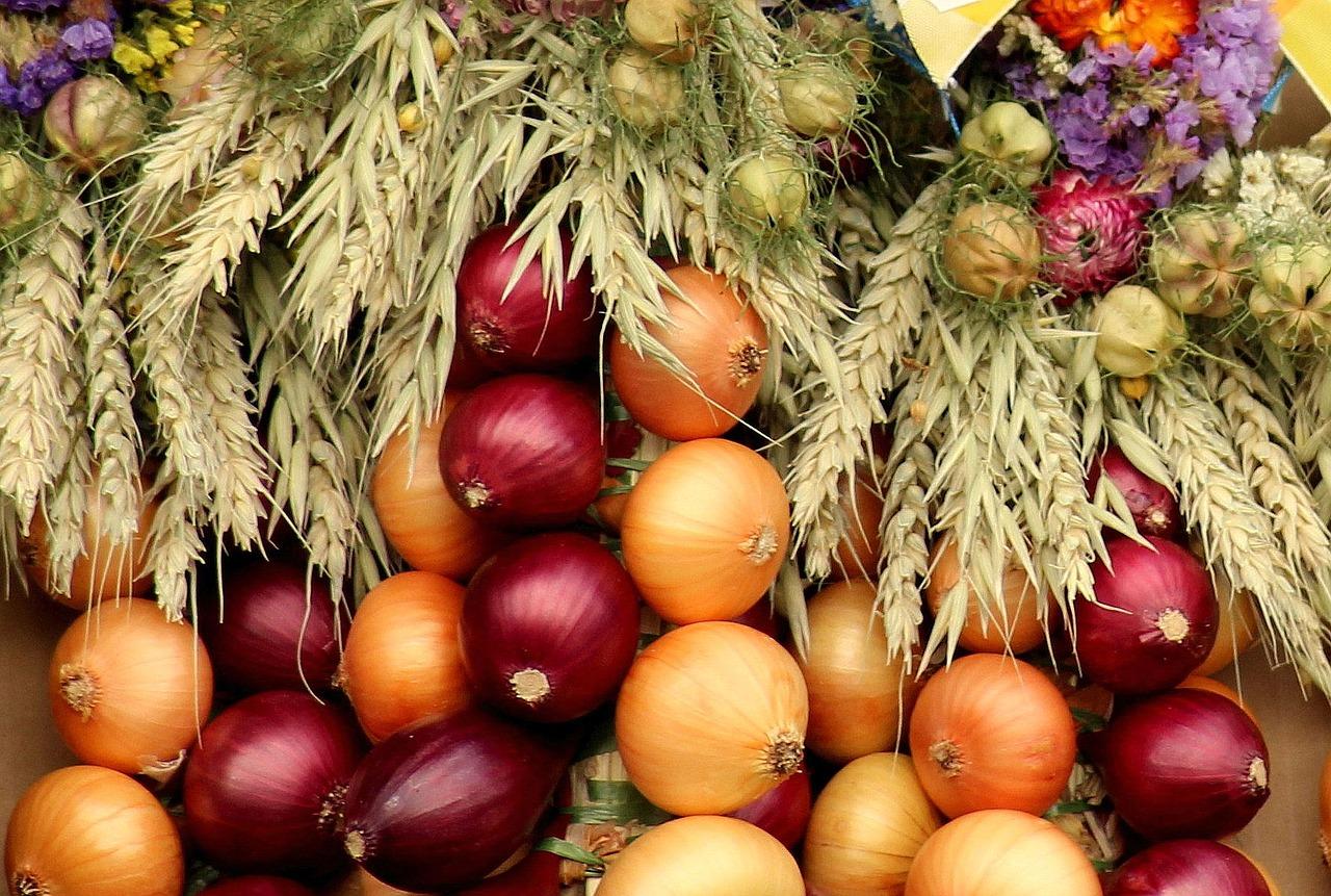 Onion,onion-companions