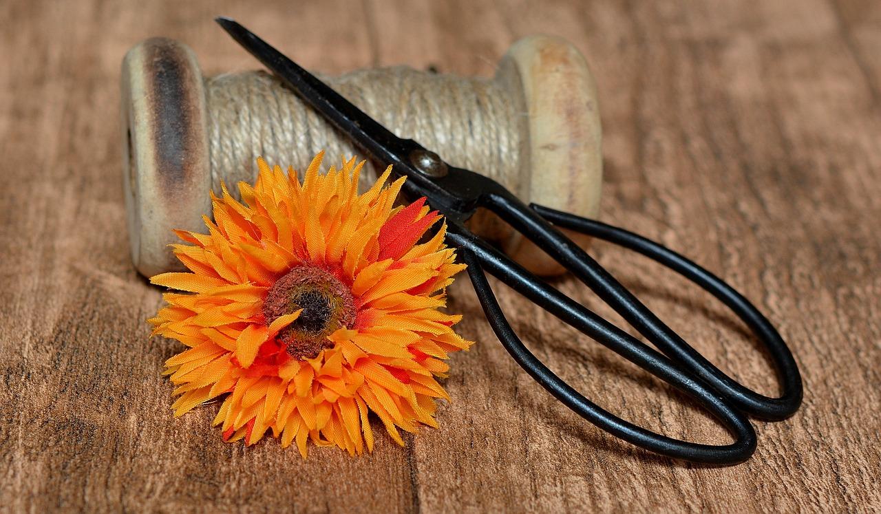 Scissors,kitchen-garden-tools