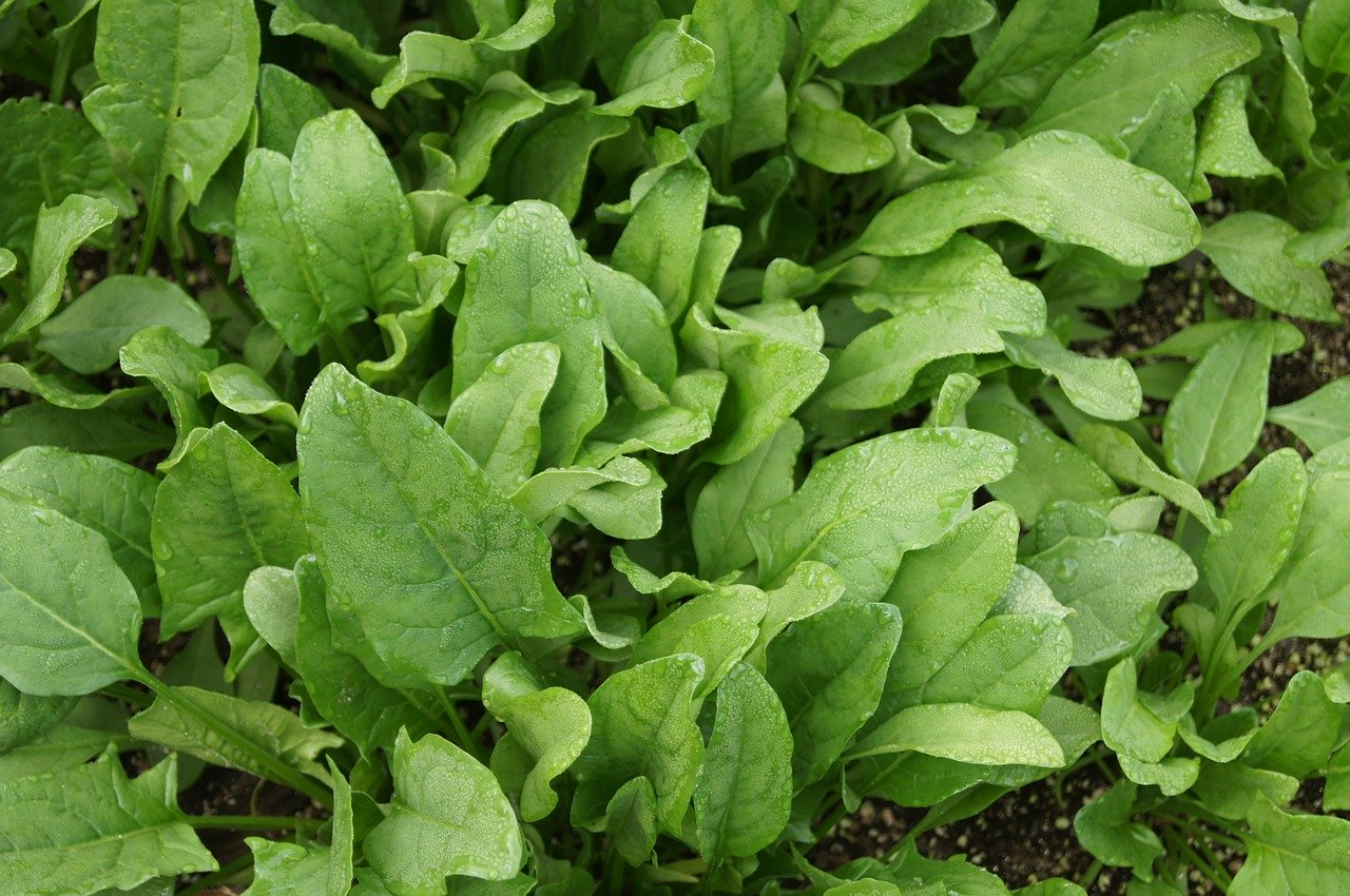 Spinach,mix-leafy vegetables