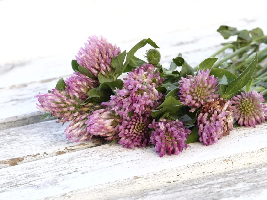 weed-companionplants-2