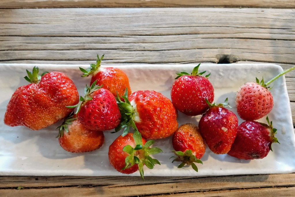 20210504_Strawberry