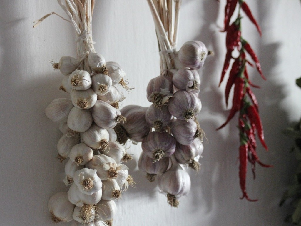 garlic-10