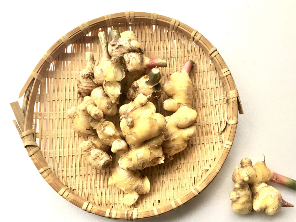 ginger (3)