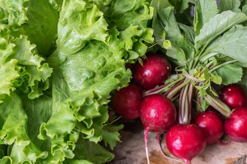 lettuce&radish-2