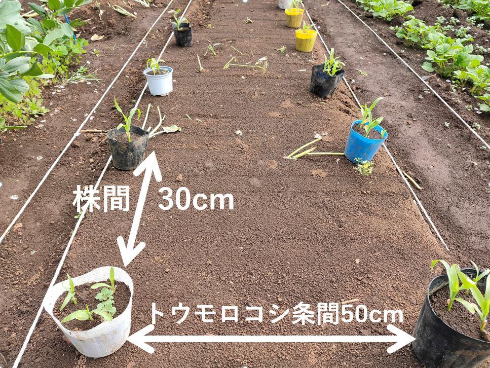 sweetcorn,edamame (10-1)