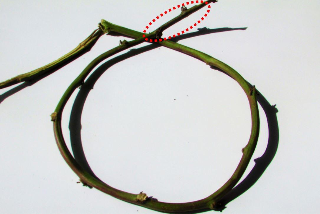 sweetpotato-wreath-1 (4-1)