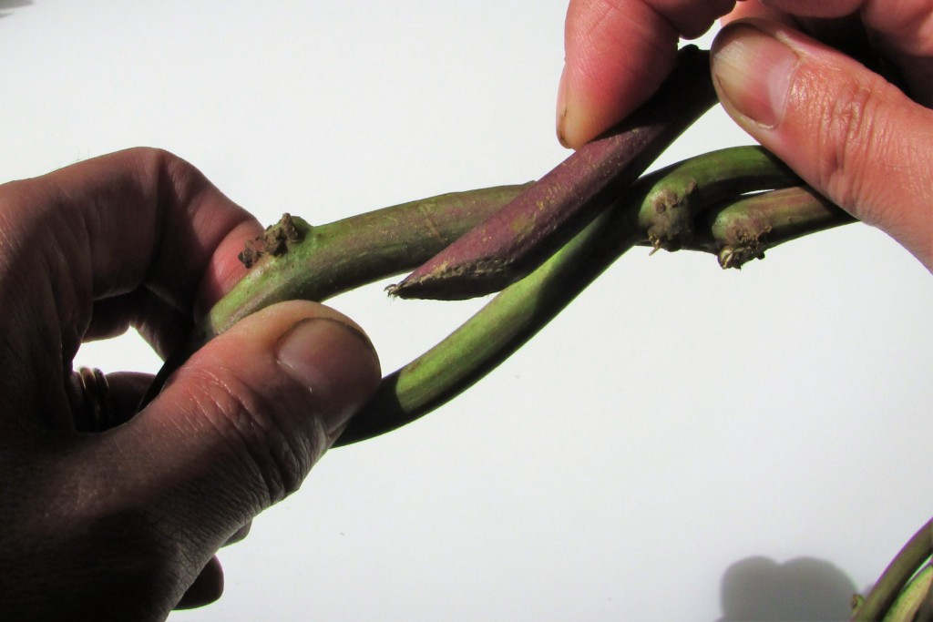 sweetpotato-wreath-1 (6)