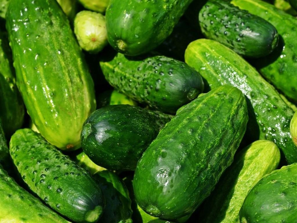 cucumbers-4