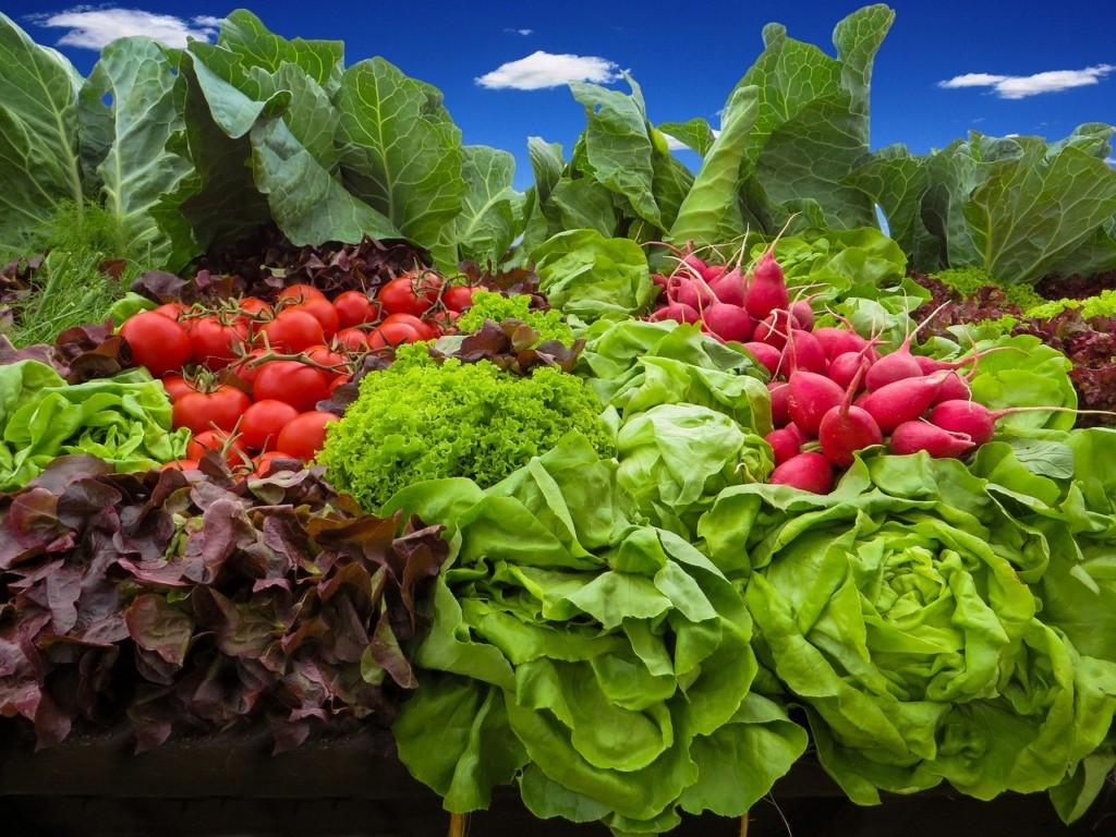 lettuce,radish,tomato