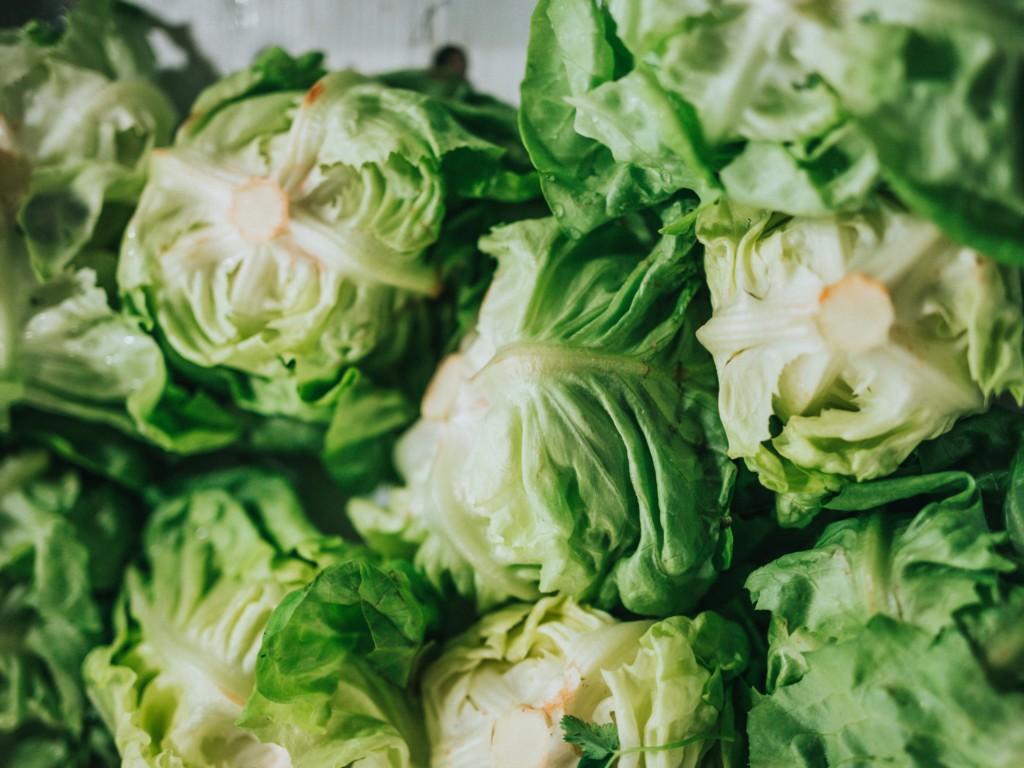 Jade lettuce