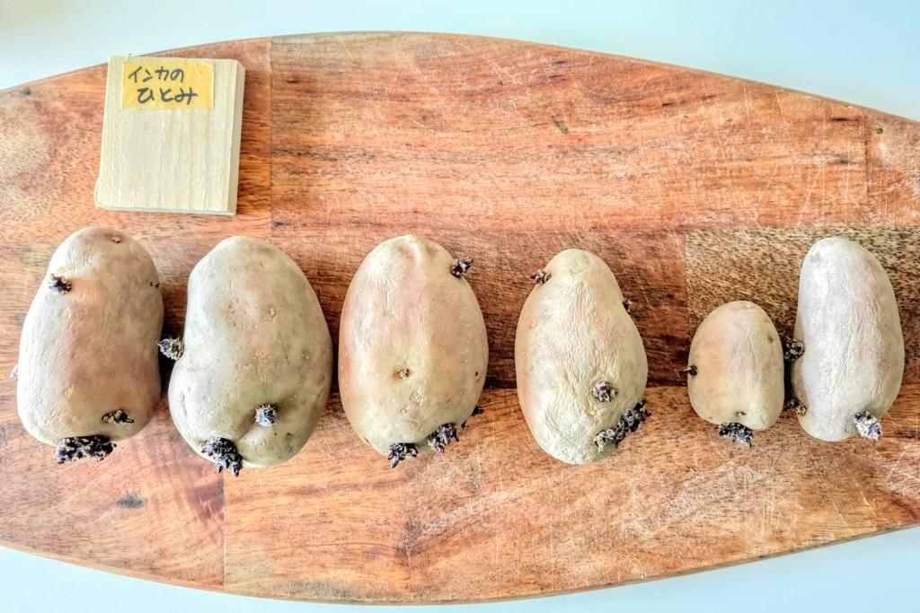 20210223_potato