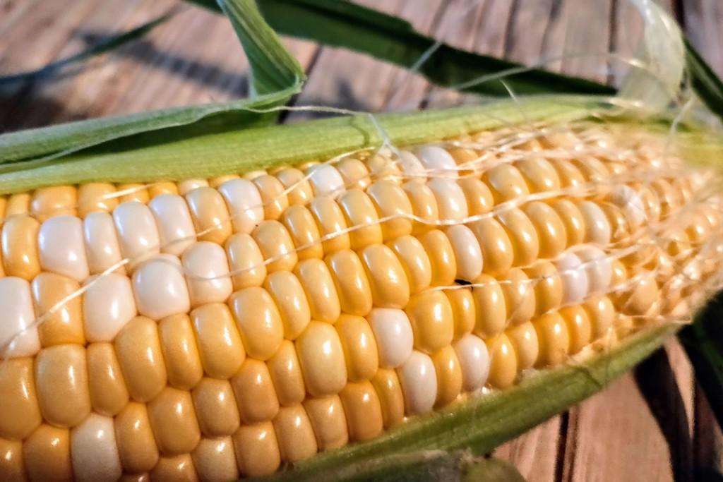20210708_tomorokoshi,corn-3 (★)