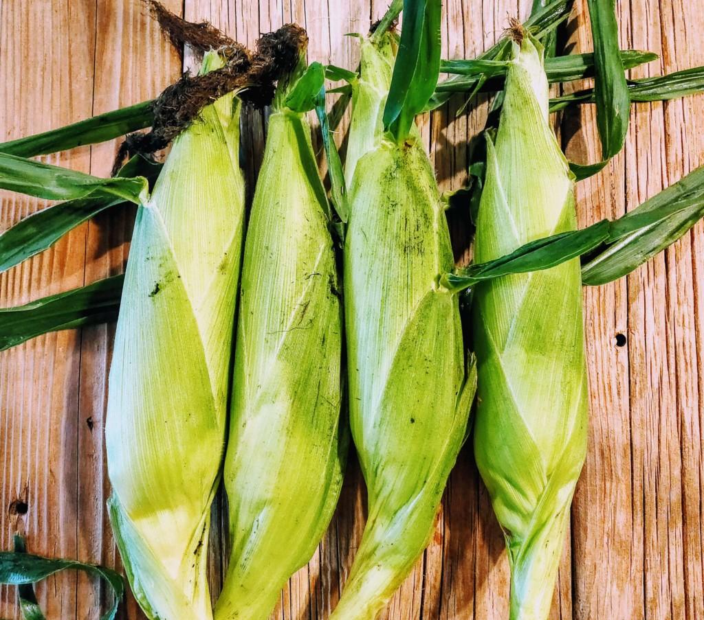 20210708_tomorokoshi,corn-5★