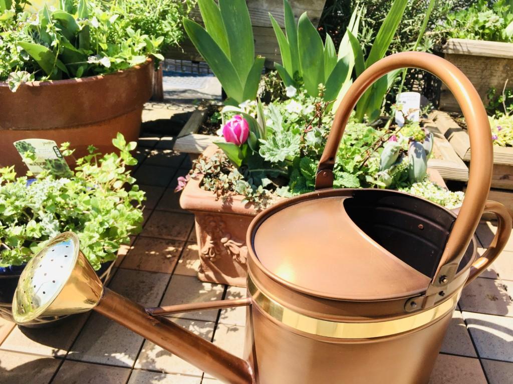 water-can (4),Costco,joro