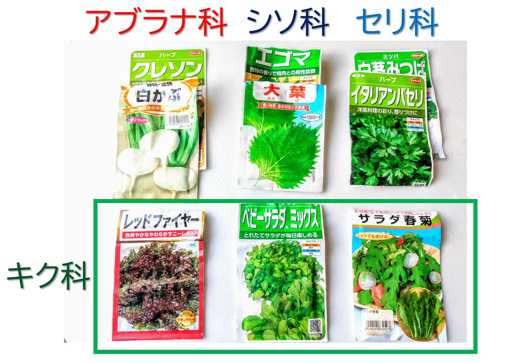 planter-leafy vegetables-r