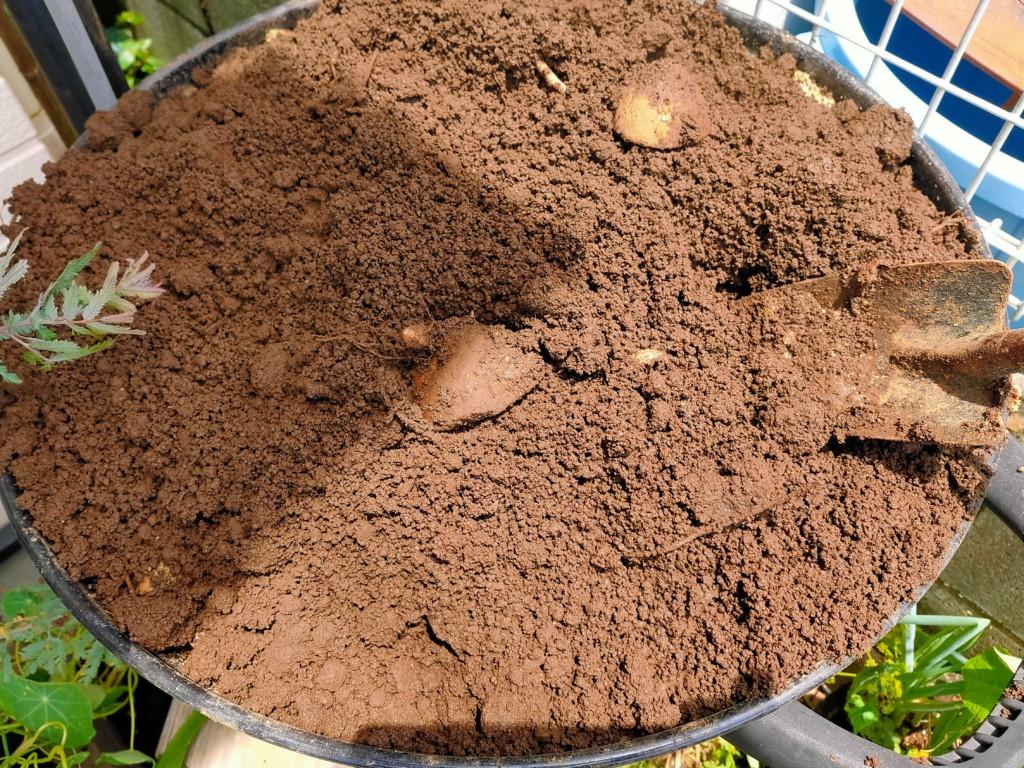 compost (15)