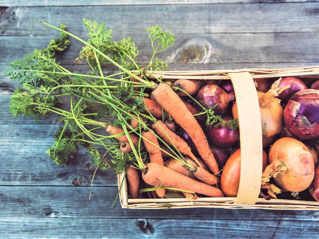 carrot,ninjin,onion,tamanegi-2