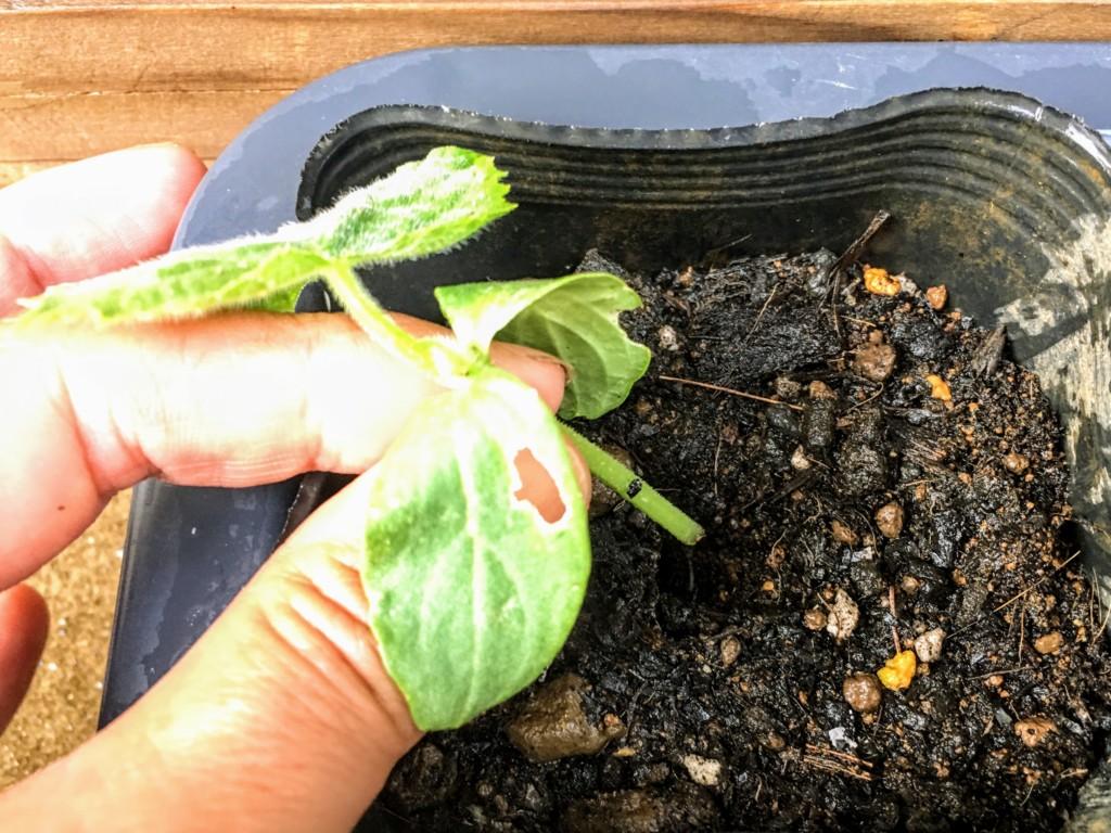 cutting,eggplant,cucumber,pimento-3