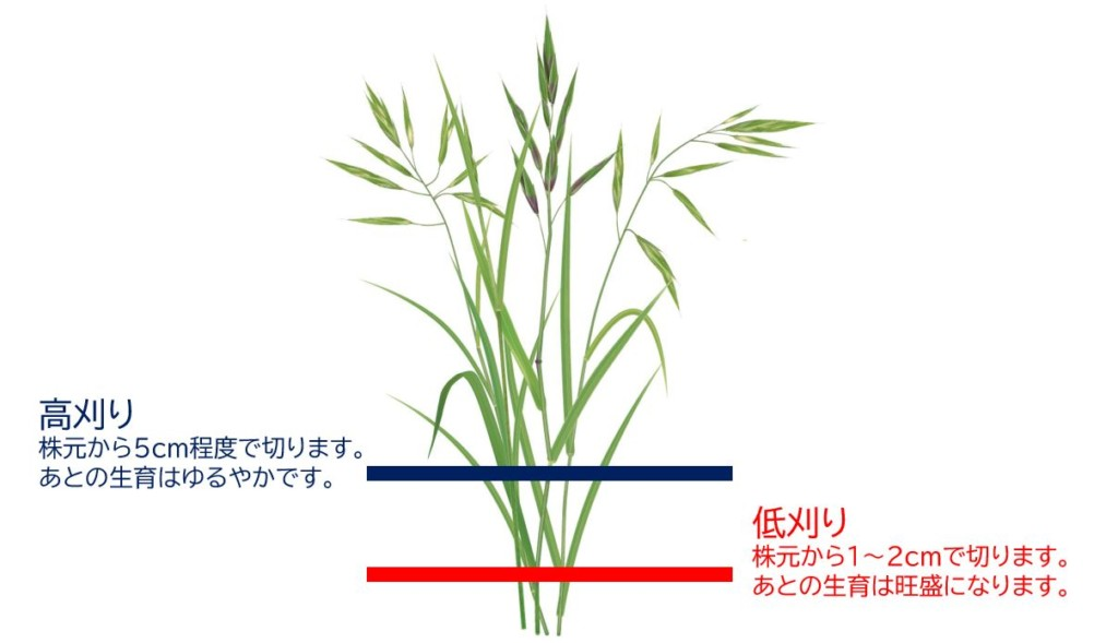 grass,weed-6-1