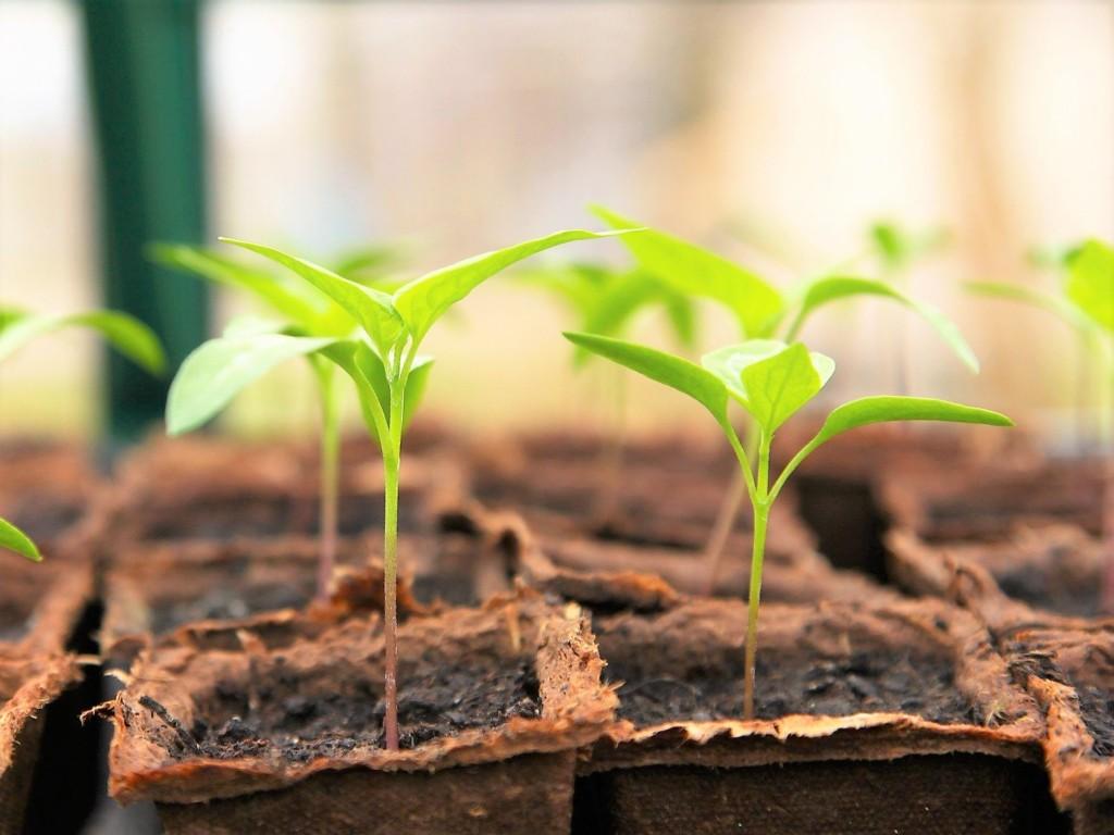 seedling-2