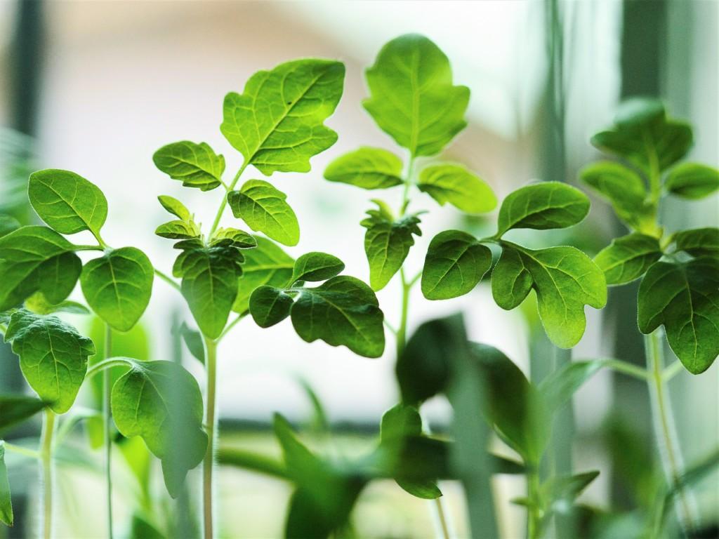 seedling-4