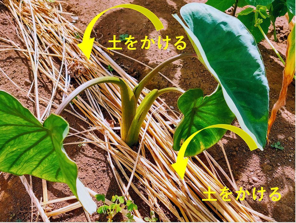 shikiwara-2-1