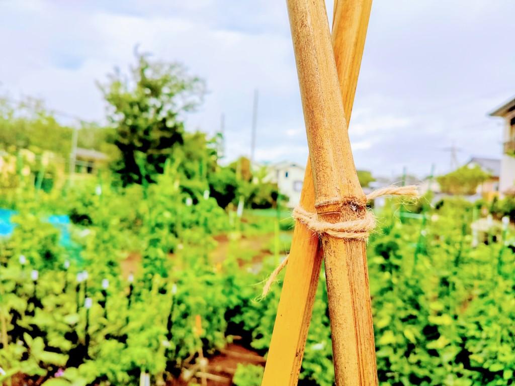 asahimo,hemp string-8