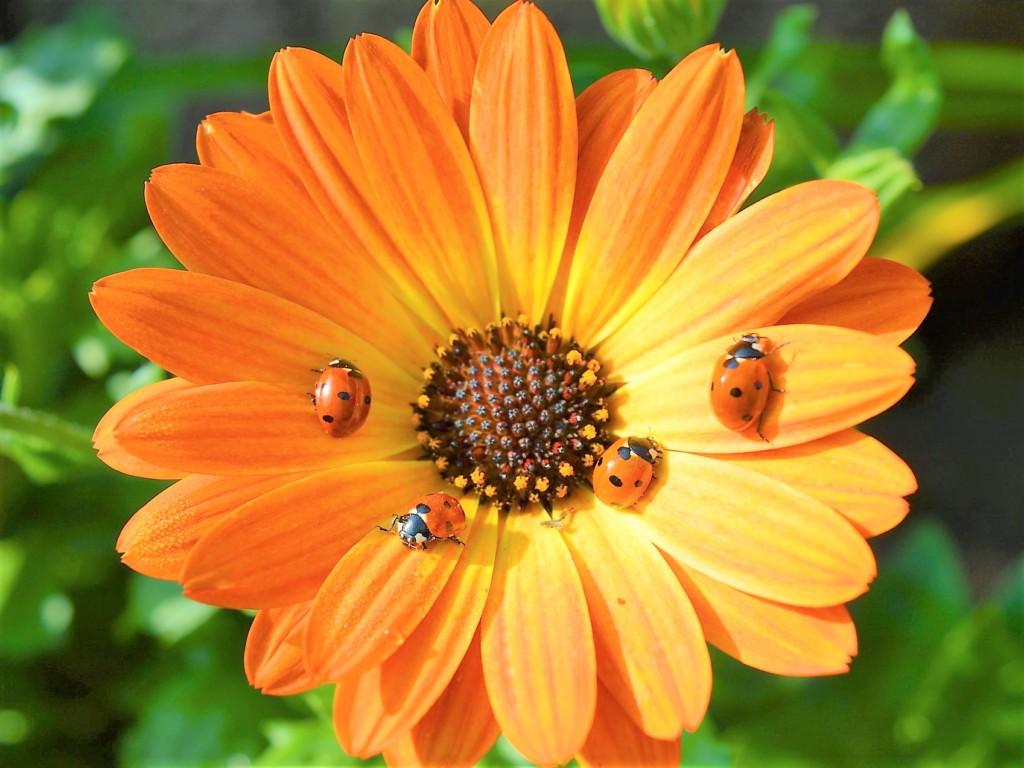 ladybird-7