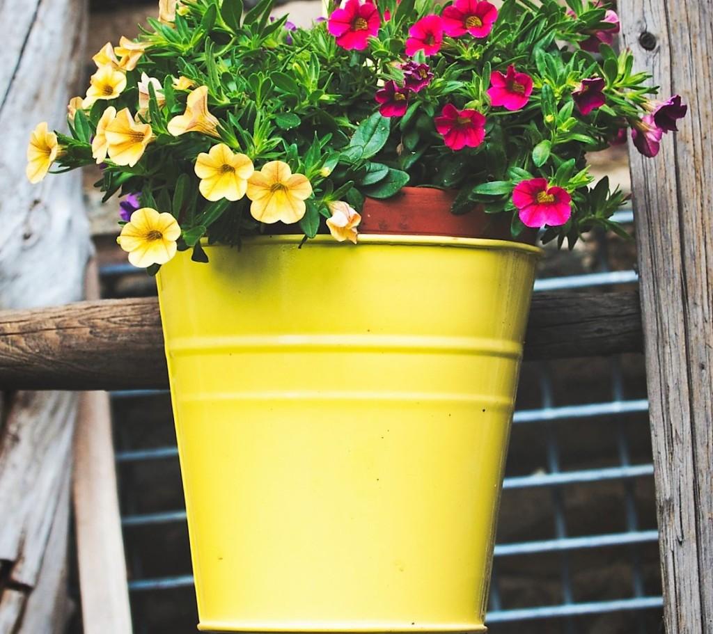 bucket,yellow
