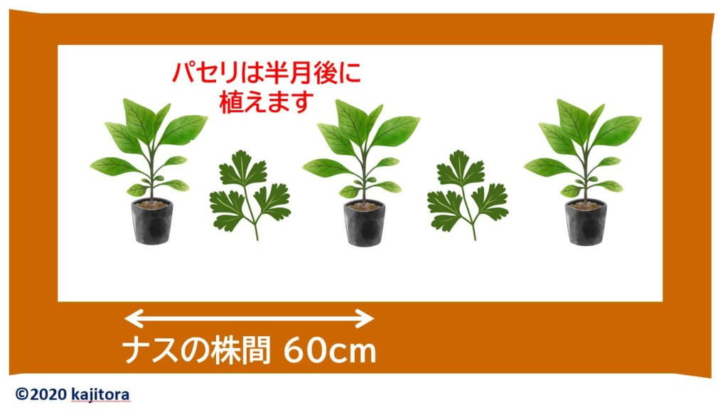eggplant,parsley