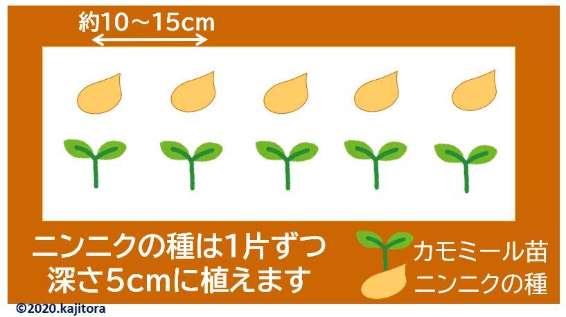 garlic,chamomile2