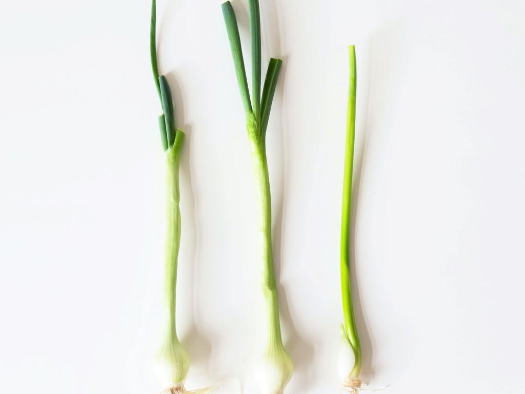 onion-19