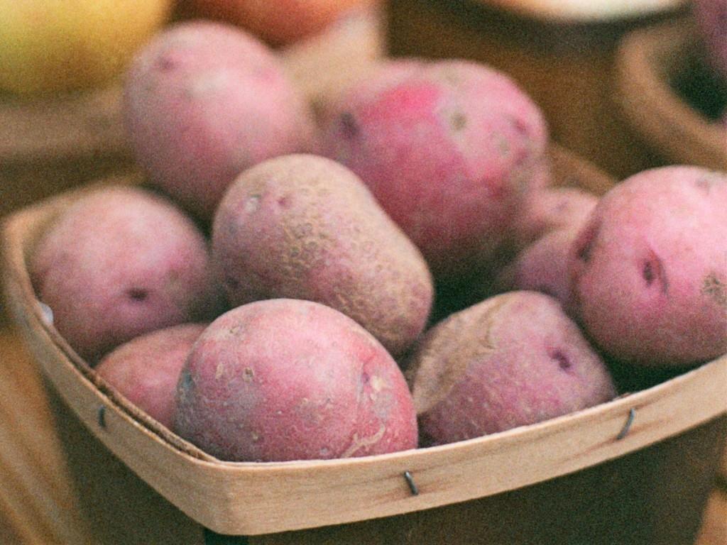 potato,Andes,20200911-4
